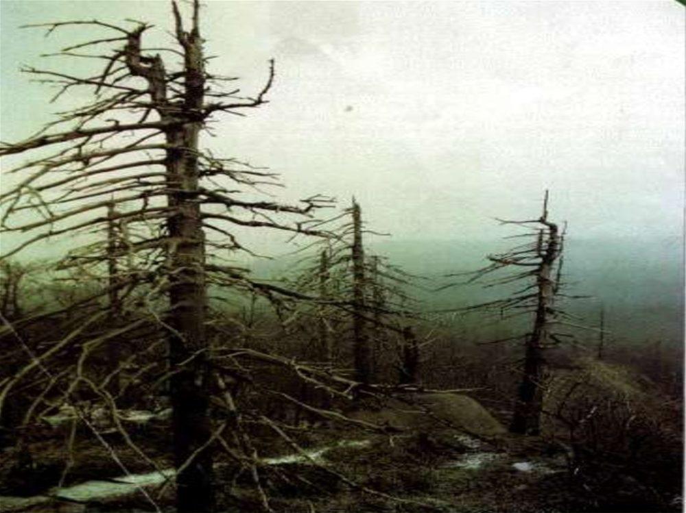 Лес, пострадавший от кислотных осадков