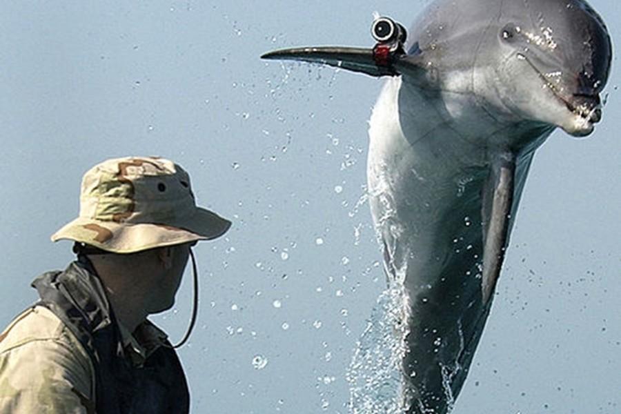 Дельфин с камерой