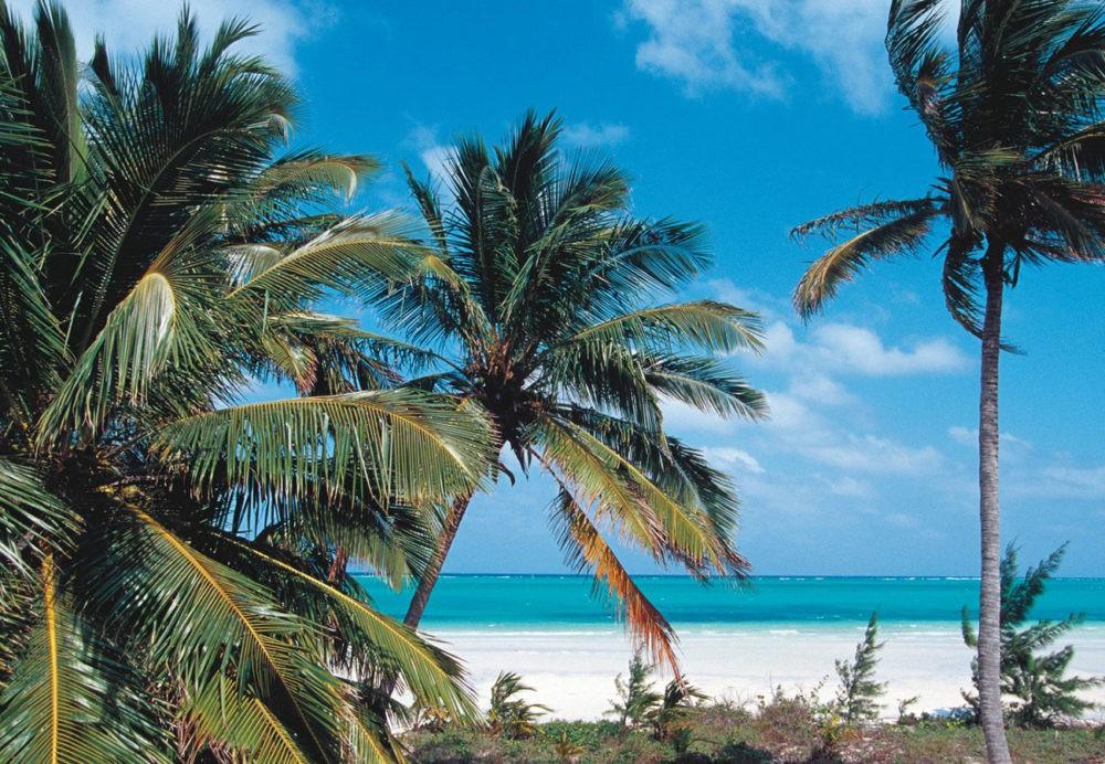 Пальмы на Bird Cay Island