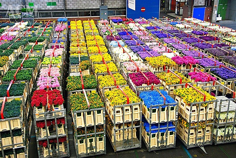 Цветочная биржа