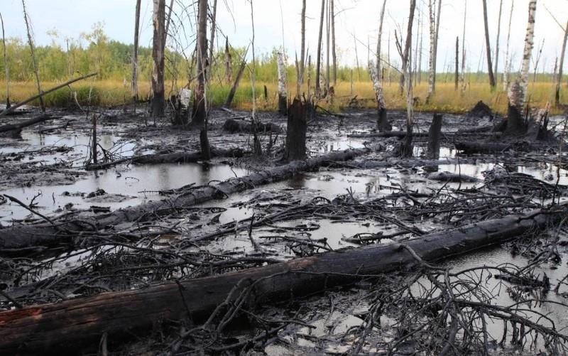 Нефтяное загрязнение почвы