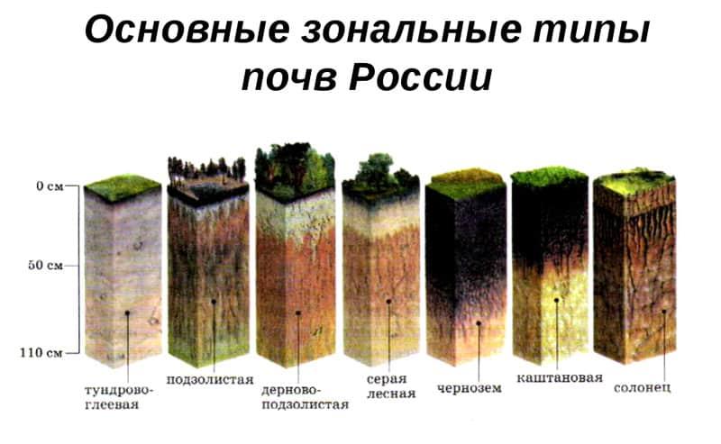 Типы почв РФ