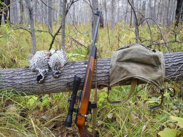 какая мелкашка лучше для охоты